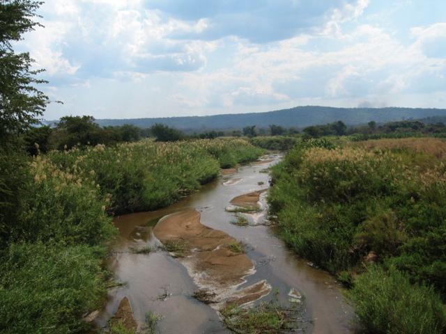 Zambian bush