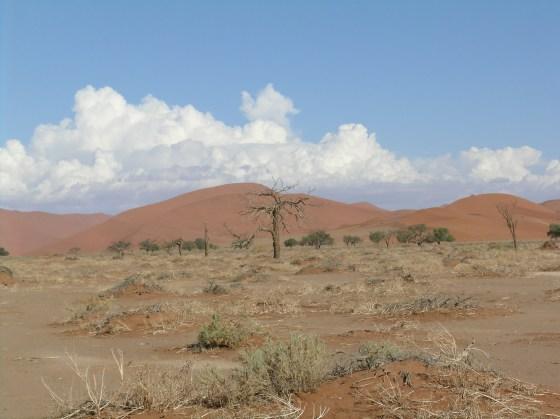 Namibian wilderness