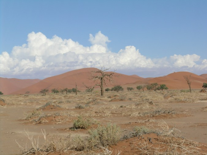 Namibian wilderness