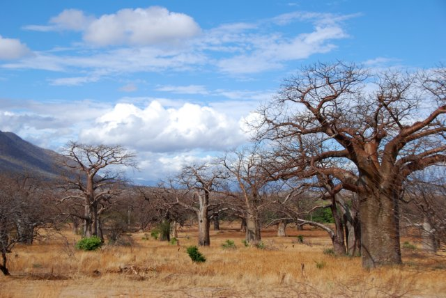 Valley of Baobab trees