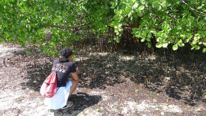 Fanny exploring the mangrove swamps