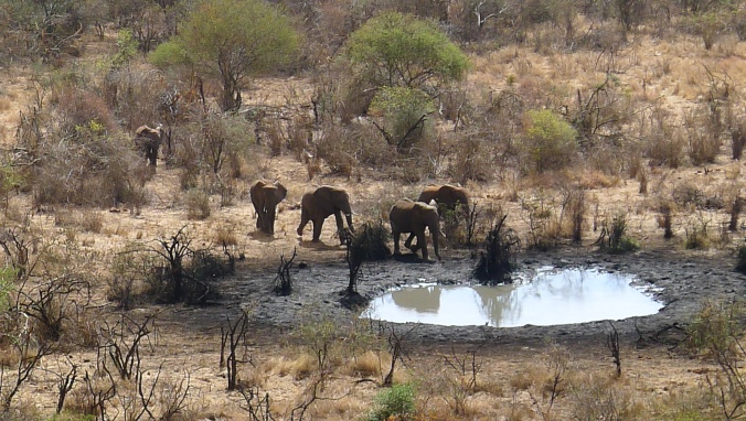 Elephants at a watering hole near our camp at Lake Chala