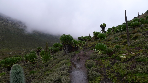 very interesting flora and fauna on the mountain side. I remember studying about how the vegetation and soils changed on Mount Kilimanjaro and Kenya when studying geography... and now I was experiencing it for myself