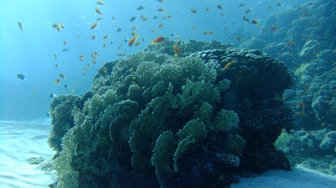 Beautiful marine life and coral reefs along the entire coast.