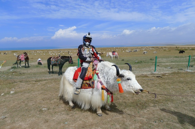 Qinghai lake ... more furry friends