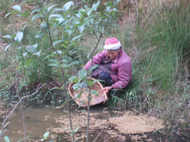 Washing off the husks in the stream next to the farm house