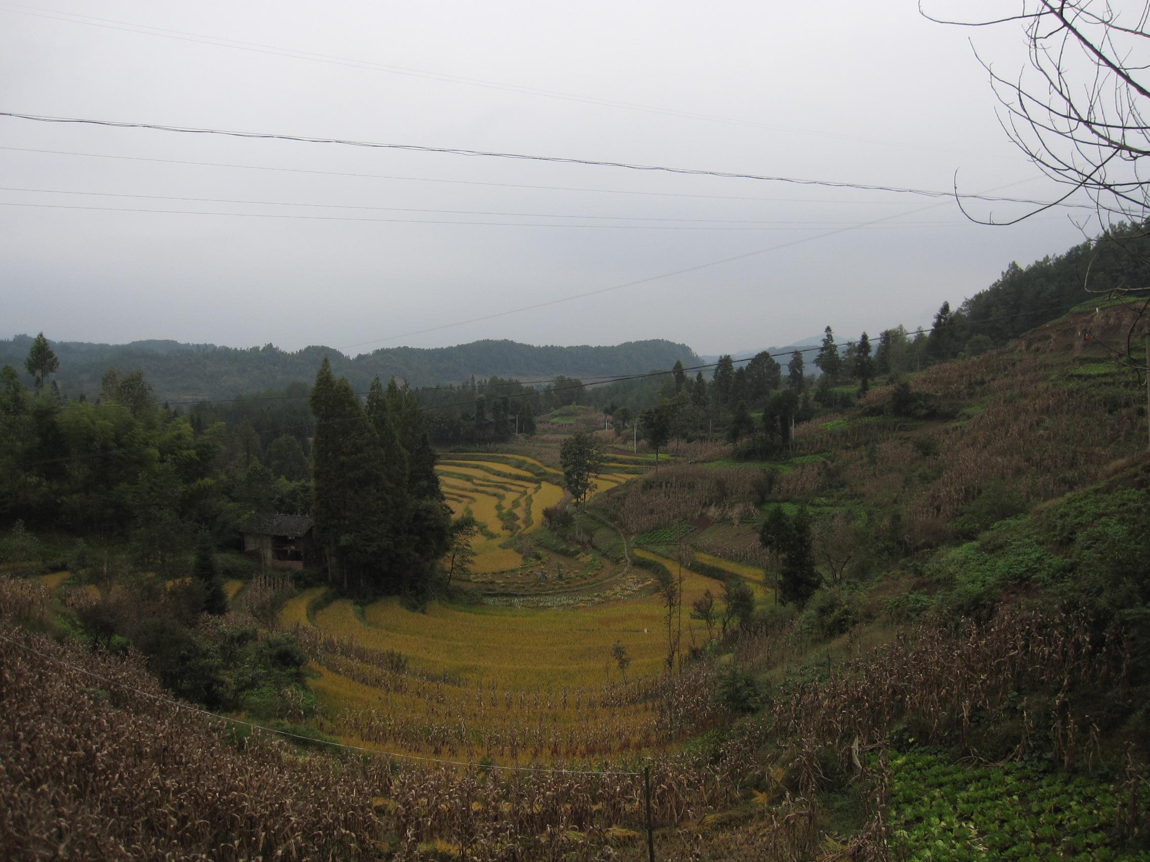 Agricultural Artwork