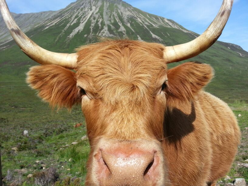 Making friends in the Highlands of Scotland